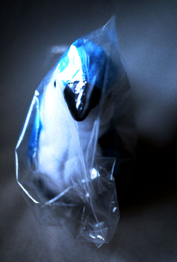 meredith-blue-bird.jpeg
